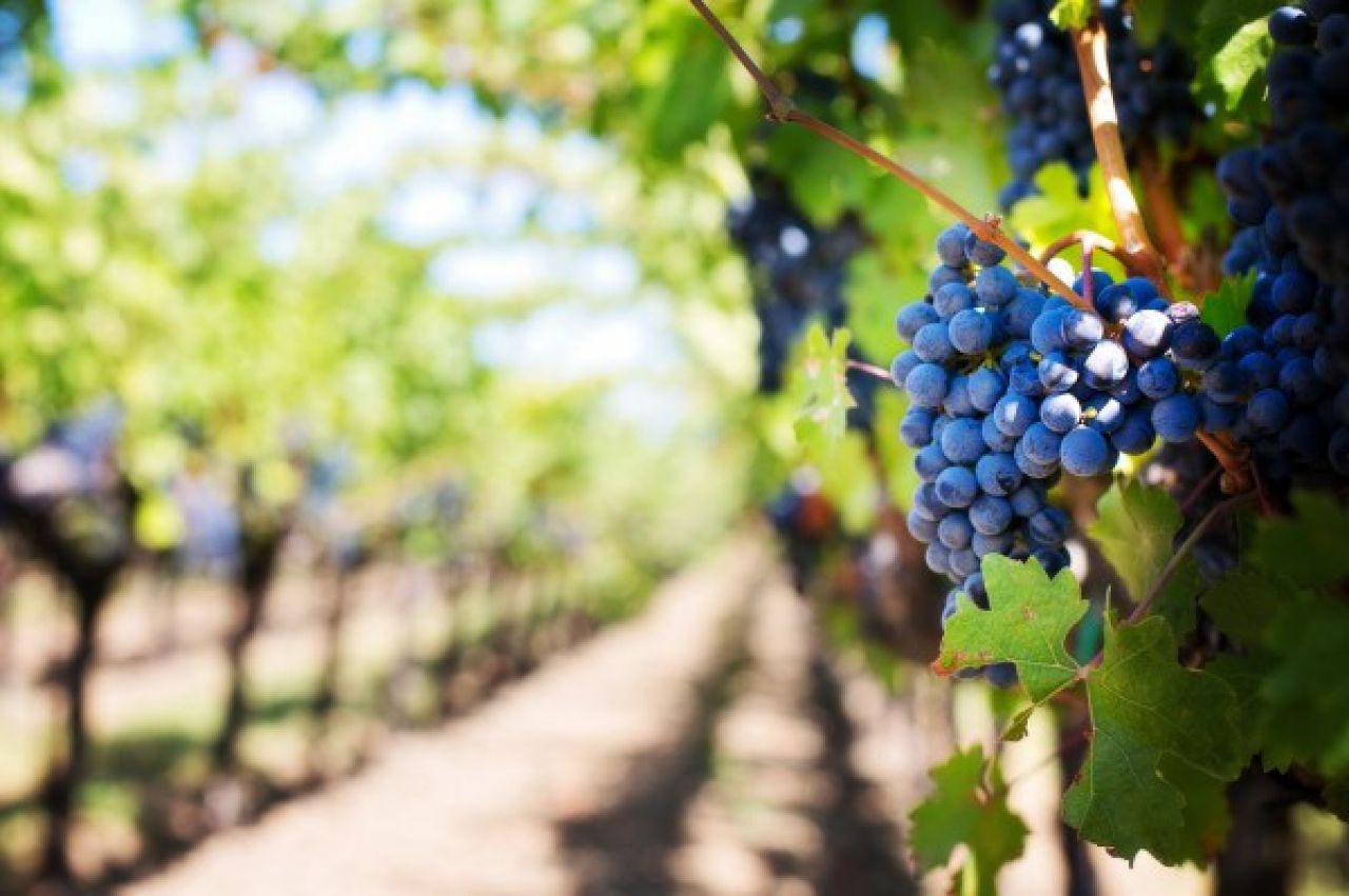 """Radionica """"Rezidba vinove loze, obrada i gnojidba vinove loze i maslina"""""""